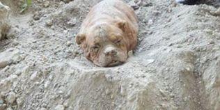 Drama unui caine ingropat de viu: femela a fost descoperita deshidratata si traumatizata