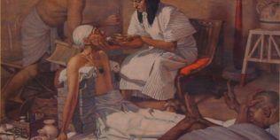 Leacurile ciudate din trecutul romanilor: balegarul si mustele pisate cu miere - bune pentru dureri de cap