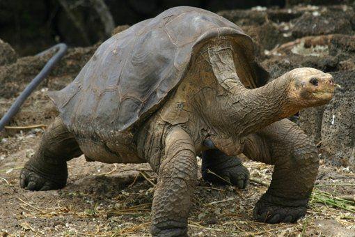 Cele mai RARE animale din lume. Cateva ZECI de exemplare in toata lumea. Pe primul loc se afla un SINGURATIC | GALERIE FOTO