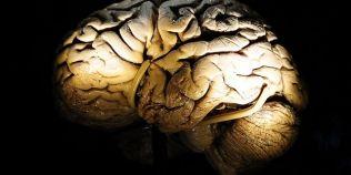 Grasimile duc la bolile cardiovasculare, dar lipsa lor poate afecta creierul
