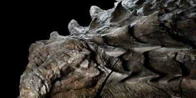 FOTO Dinozaurul descoperit accidental intr-o mina din Canada: fosila de peste 100 de milioane de ani s-a pastrat atat de bine, ca pare o statuie