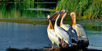 ANALIZA De ce ocolesc turistii straini Delta Dunarii
