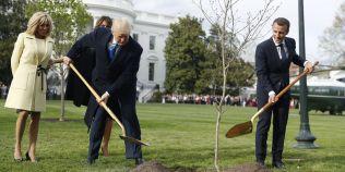 Misterul disparitiei stejarului plantat de Macron si Trump la Casa Alba a fost elucidat